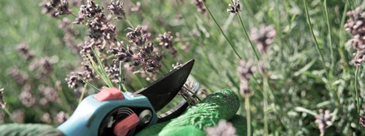 Pflanzen richtig schneiden