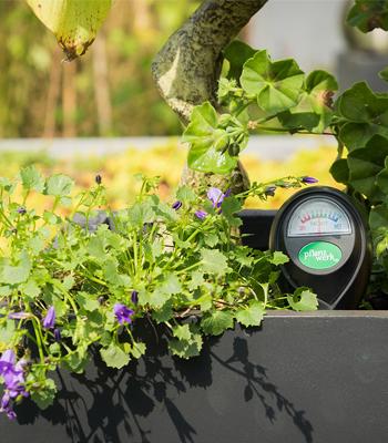 Blumen im Pflanztrog richtig gedeihen lassen - Gartengestaltung
