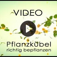 Pflanzkübel richtig bepflanzen - Bepflanzungshinweise